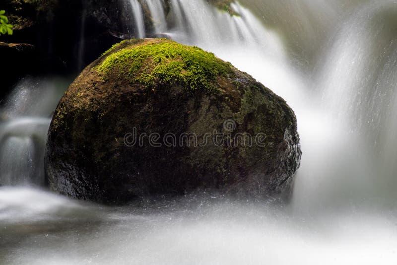 Närbild av ett Moss Covered Rock Surrounded By vatten royaltyfri foto