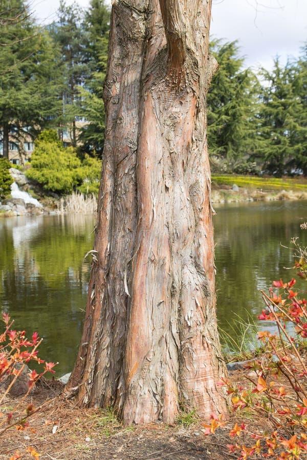 Närbild av ett trädskäll royaltyfria bilder