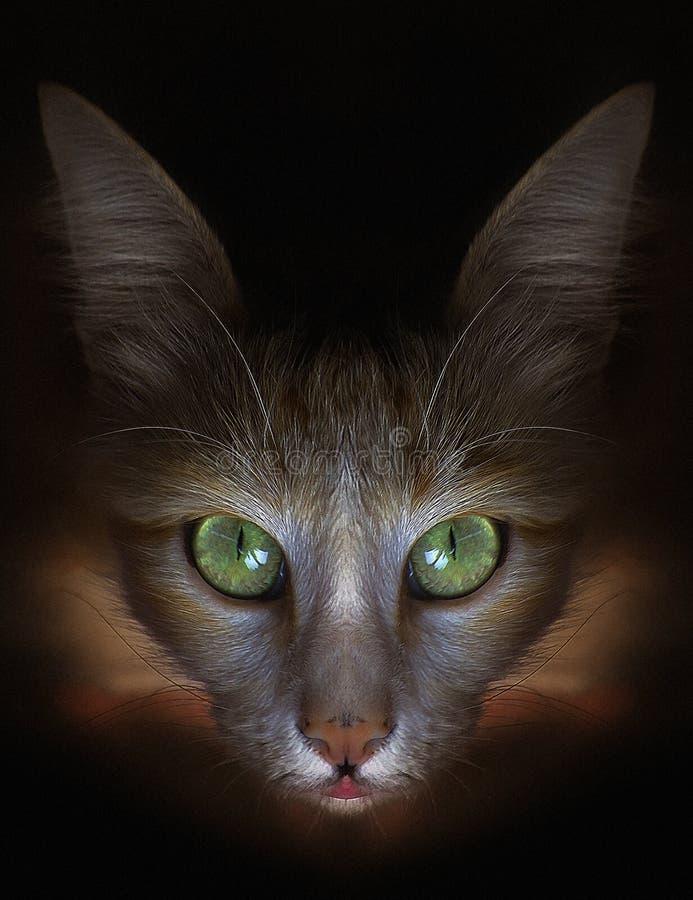 Närbild av framsidan för katt` s arkivbilder