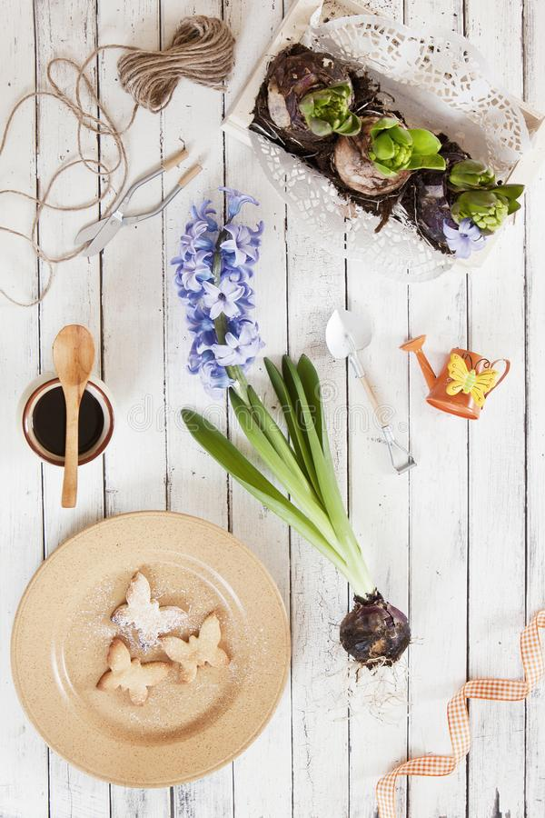 Närbild av gulliga kakor för en fjäril på en platta och hyacintblommor på en vit bakgrund för tappning Vår- och påskbegrepp, royaltyfri bild