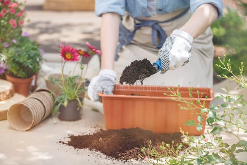 Närbild av händer för trädgårdsmästare` s arkivfoton