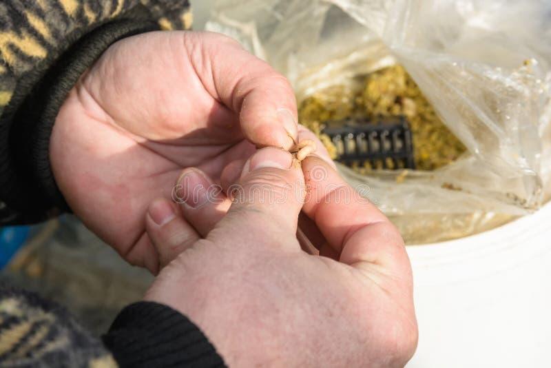 Närbild av händerna av fiskaren med larven arkivfoto