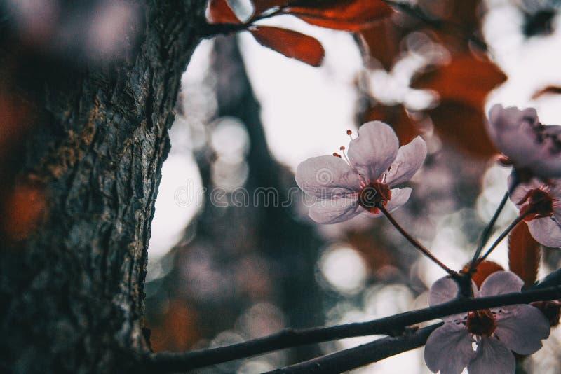 Närbild av litet ljus - rosa blommor royaltyfri foto