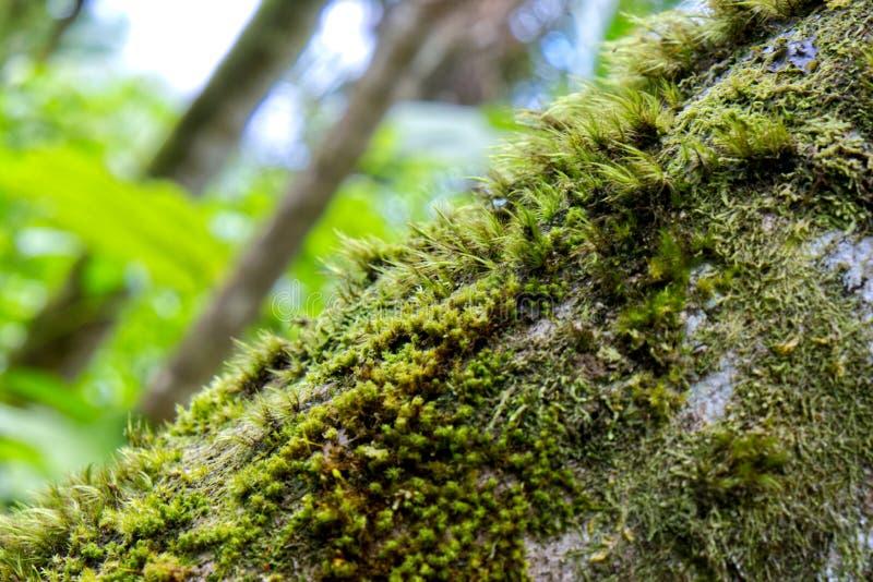 Närbild av mossa på Rainforestträd arkivfoton