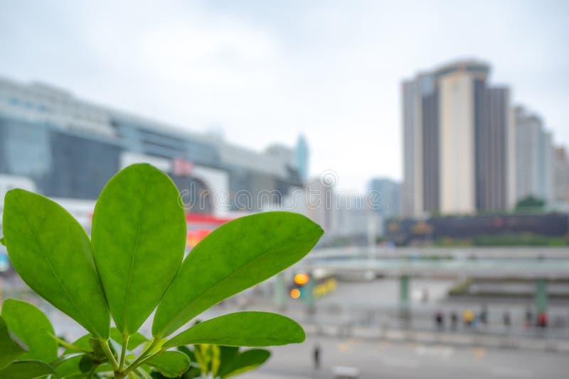 Närbild av nya gröna blad på suddigt affärsområde i guanzhoumidtownen för bakgrund fotografering för bildbyråer