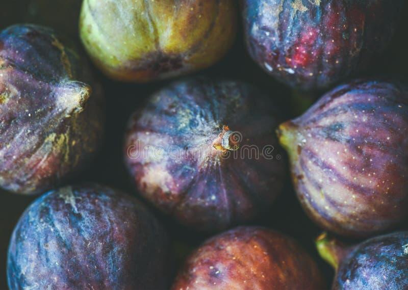 Närbild av nya mogna purpurfärgade fikonträd, bästa sikt royaltyfria foton