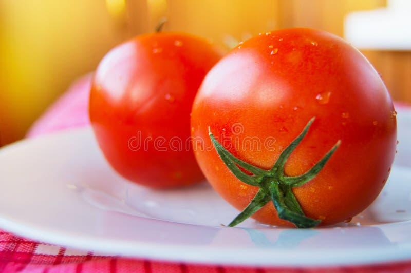 Närbild av nya mogna tomater med vattendroppar och en grön peduncle på en vit platta, selektiv fokus royaltyfria foton