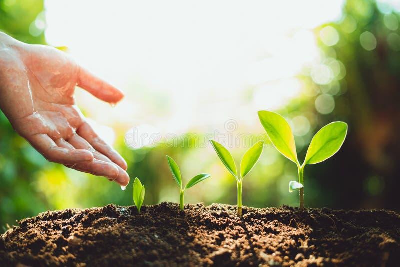 Närbild av nytt grönt växa för växt, trädtillväxtmoment i natur och härlig morgonbelysning royaltyfri fotografi