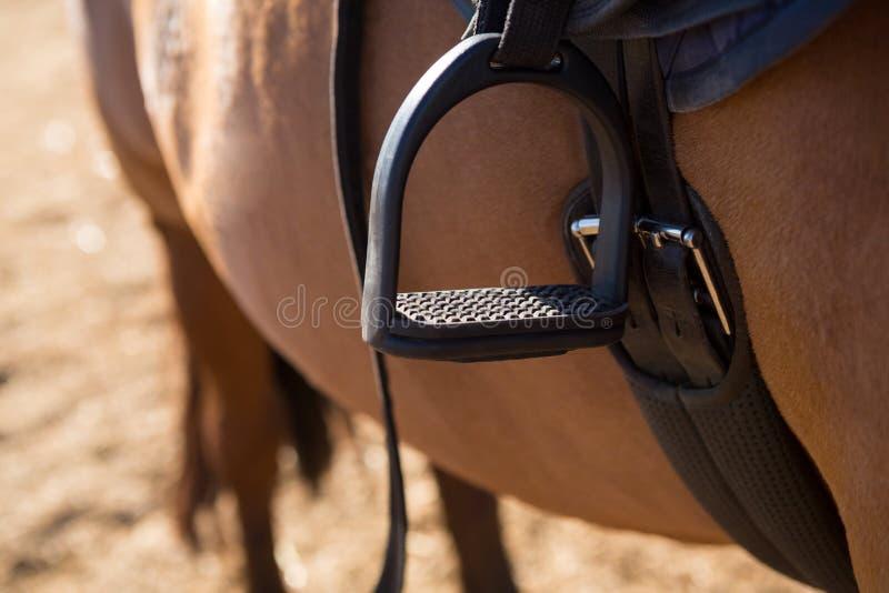 Närbild av sadeln som binds på häst arkivbild