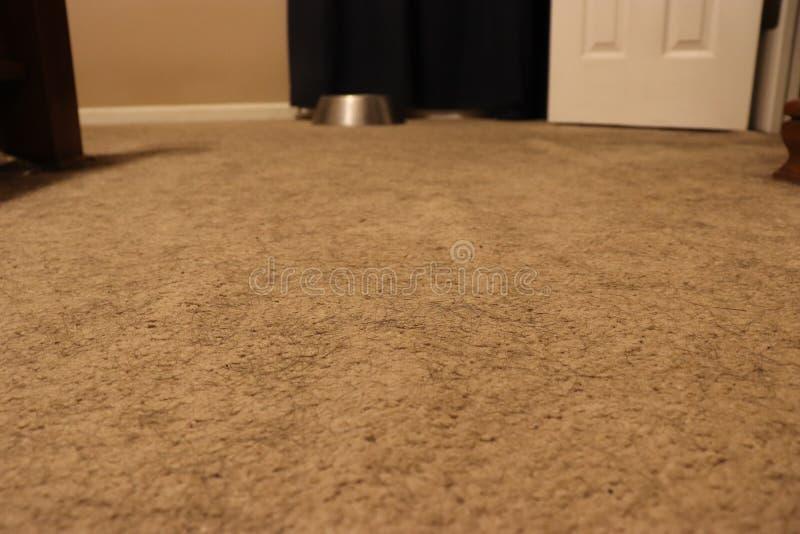 Närbild av smutsig matta med hundhår royaltyfria foton