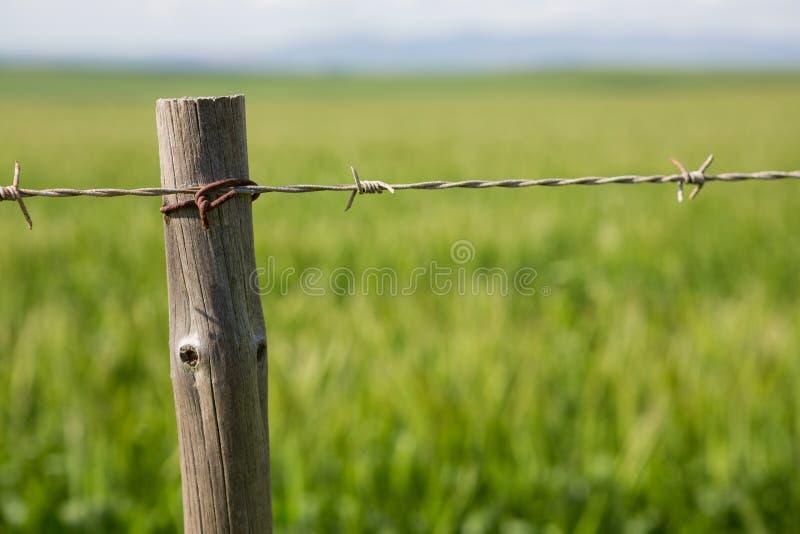 Download Närbild av staketet i fält arkivfoto. Bild av flöjt, förälskelse - 78725856