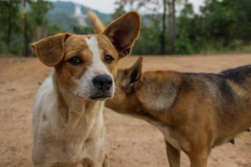 Närbild av två gulliga hundkapplöpning på bygden royaltyfri fotografi