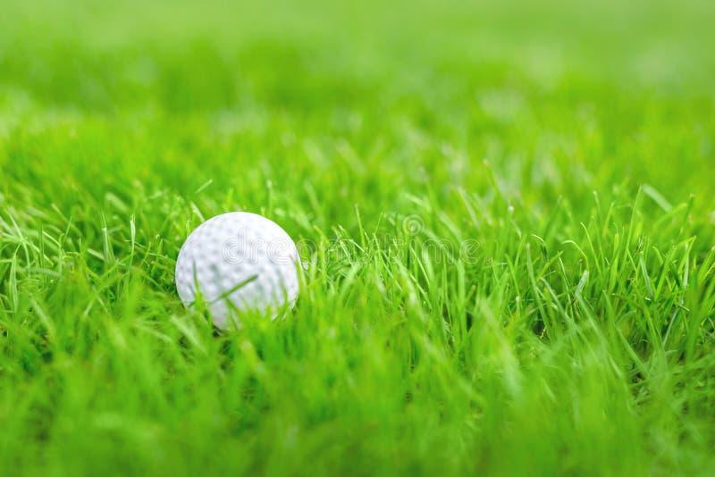 Närbild av vit golfboll i äng för grönt gräs Detaljer av den modiga kursen Semesterort med utomhus- activitie för sport royaltyfri foto