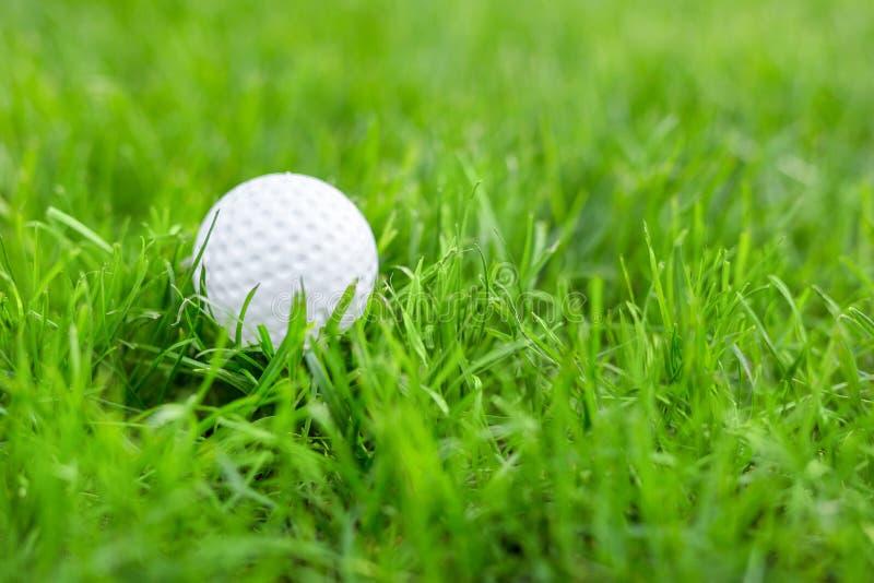 Närbild av vit golfboll i äng för grönt gräs Detaljer av lekfältet Dåligt förberedd gräsmatta för professionelllek royaltyfri bild