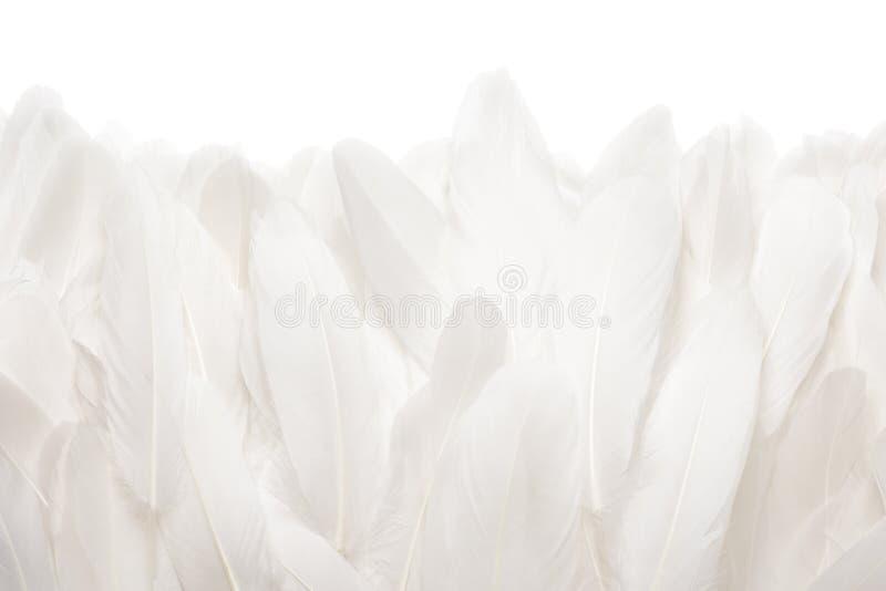 Närbild av vita gåsfjädrar som isoleras på vit bakgrund royaltyfri foto
