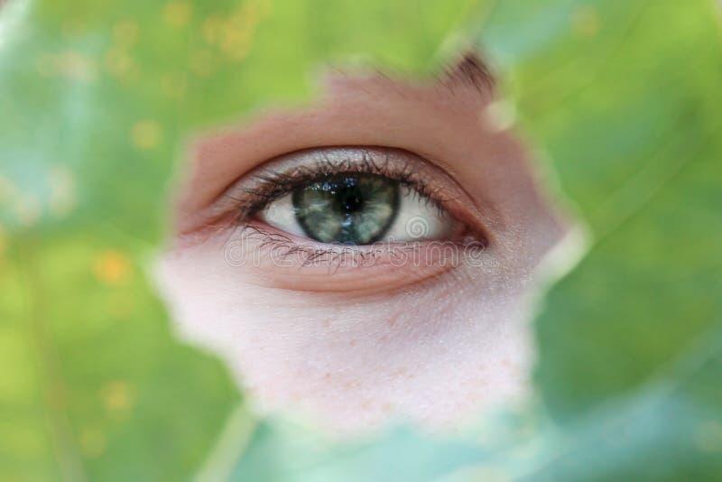 Närbild för grönt öga med en grön ram p?rlor f?r bl? f?r begrepp f?r bakgrundssk?nhet blir grund naturliga over f?r beh?llare kos royaltyfri foto