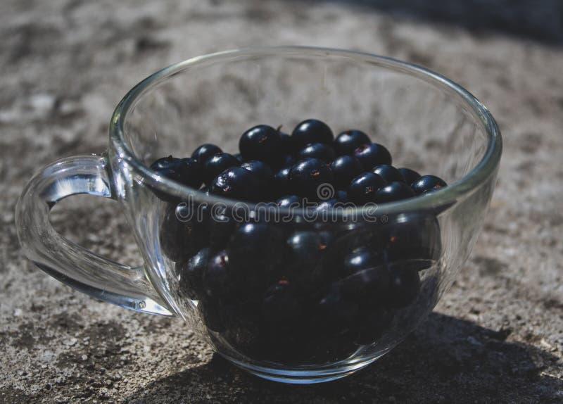 Närbild för svart vinbär i en genomskinlig kopp Det finns ett ställe för text, kopieringsutrymme royaltyfria bilder
