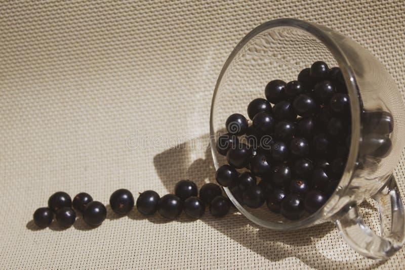 Närbild för svart vinbär i en genomskinlig kopp Det finns ett ställe för text, kopieringsutrymme royaltyfria foton