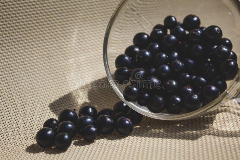 Närbild för svart vinbär i en genomskinlig kopp Det finns ett ställe för text, kopieringsutrymme royaltyfri foto