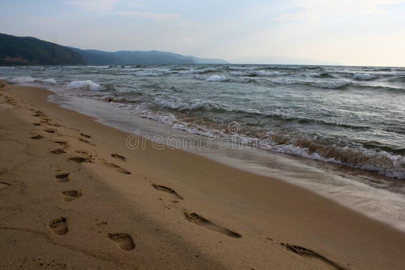 Närbildbana av familjfotspår på den sandiga stranden fotografering för bildbyråer