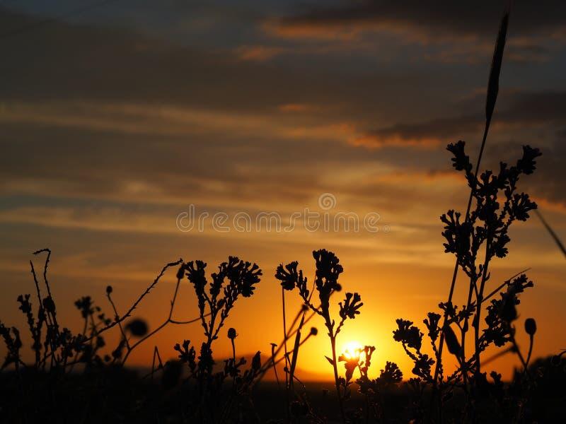 Närbildbuskekontur på solnedgången arkivfoton