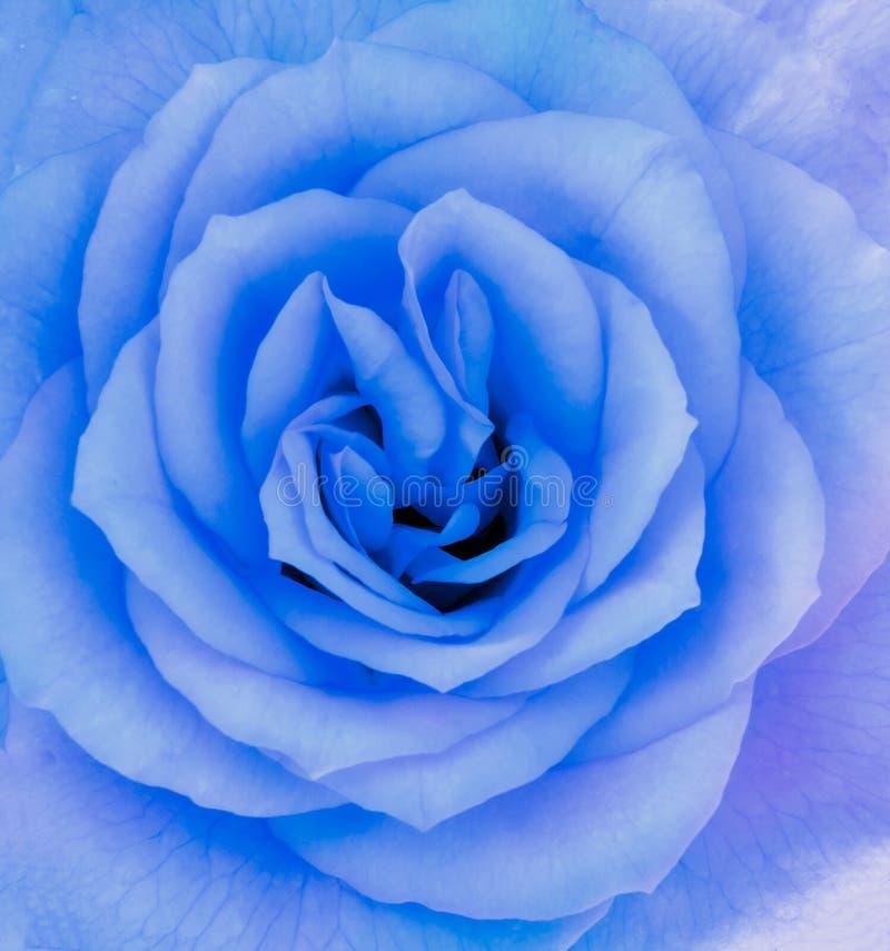 Närbilddetaljen av slösar den rosa blomman arkivbilder