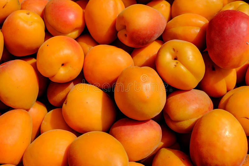 Närbilddetaljsikt av persikor i solljus fotografering för bildbyråer