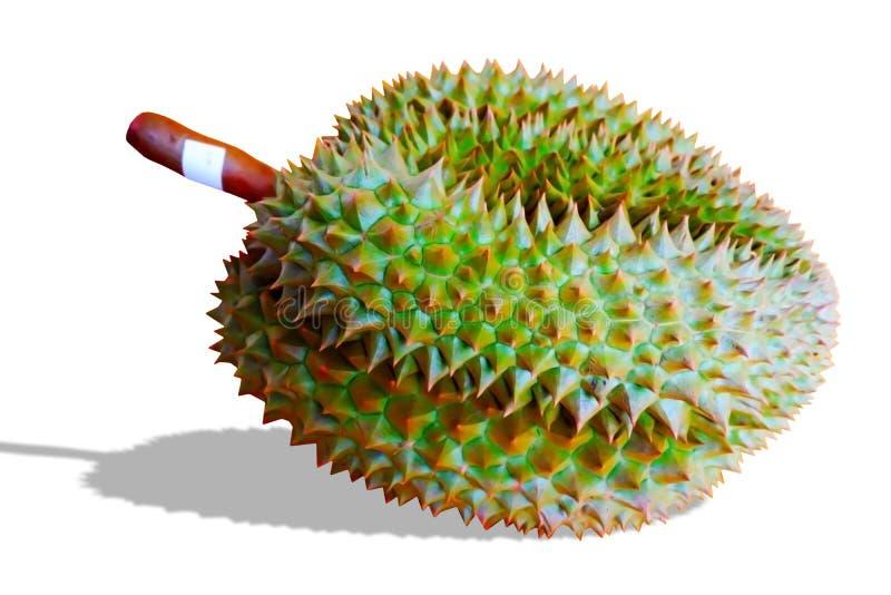 NärbildDurianMonthong isolat på vit bakgrund arkivfoton