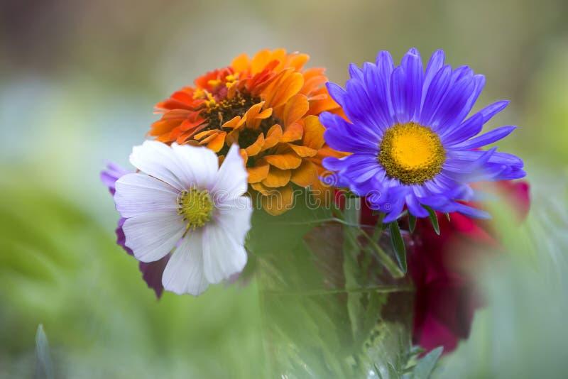 Närbilden av det ljusa mångfärgade fältet för den härliga hösten blommar c royaltyfria foton