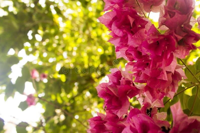 Närbilden av en grupp av violeten blommar med lövverk som bakgrund royaltyfri foto