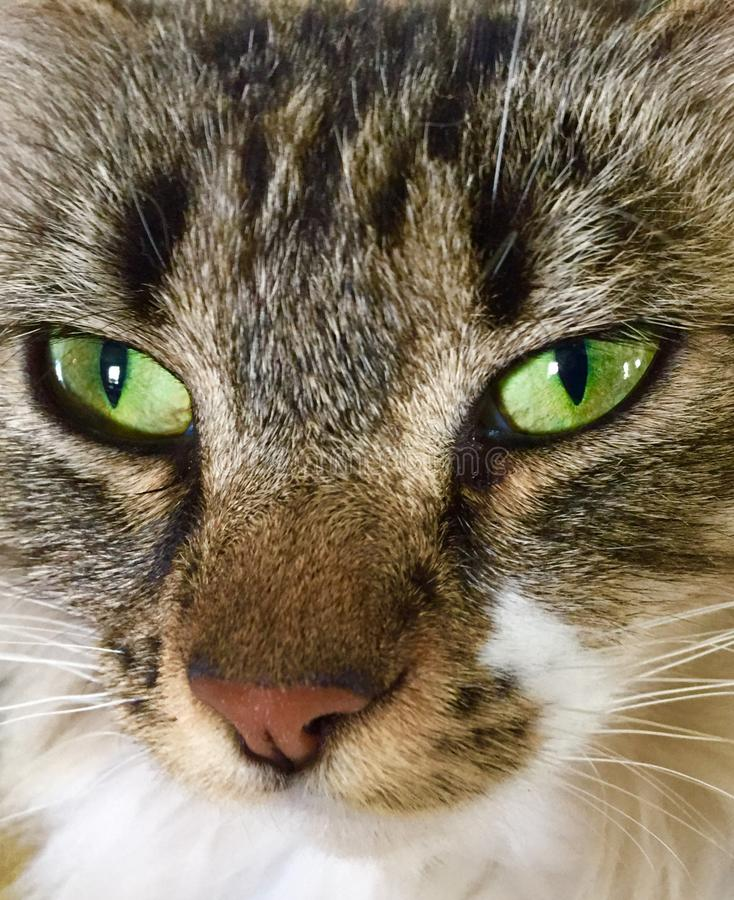 Närbilden av katter vänder mot arkivbild