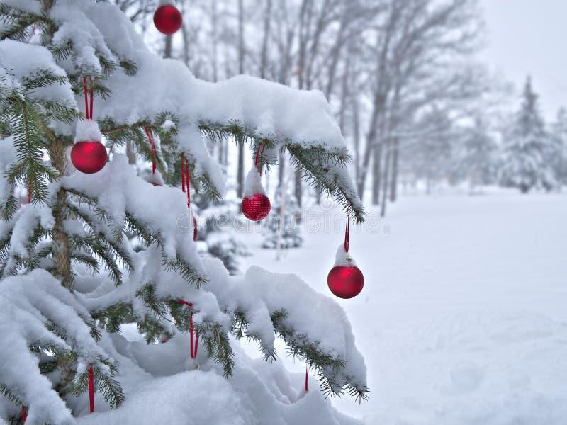 Närbilden av röda julstruntsaker klumpa ihop sig att hänga på snö som täckas för att sörja trädfilialer utanför royaltyfri bild