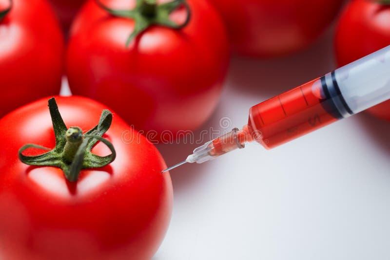 Närbilden sköt av en injektionsspruta som injicerar en röd flytande till nya röda tomater royaltyfria bilder