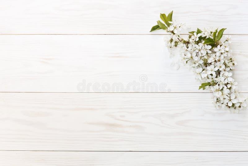 Närbildfotoet av härliga vita blomma Cherry Tree förgrena sig Bröllop, koppling eller trolovningbegrepp på tappningträbackg royaltyfri fotografi