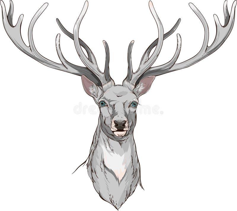 Närbildhjorthuvud med horn stock illustrationer