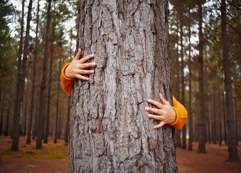 Närbildkvinnas hand som kramar trädstammen royaltyfri fotografi