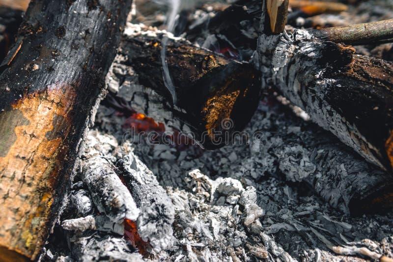 N?rbildsikt av brand i tr?na under campa, brasa, l?gereld, v?gtur, lopp, matlagning arkivbilder