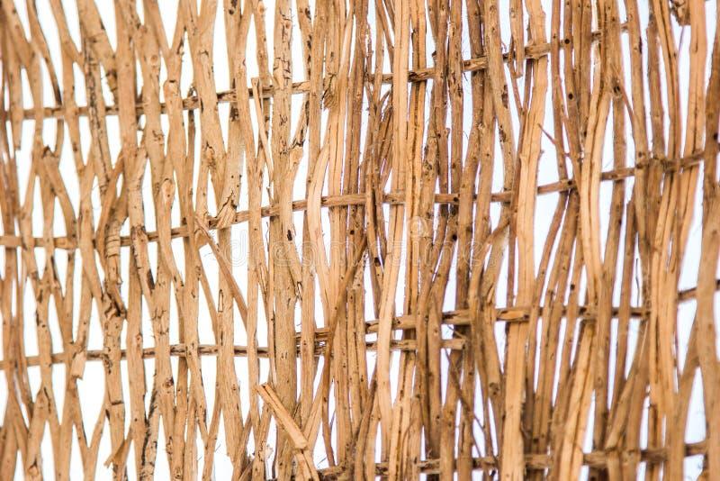 närbildsikt av den dekorativa gnäggandet royaltyfri foto