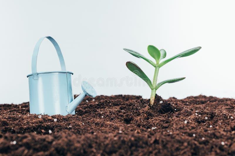 Närbildsikt av gröna växter i jord och bevattnakruka royaltyfria foton