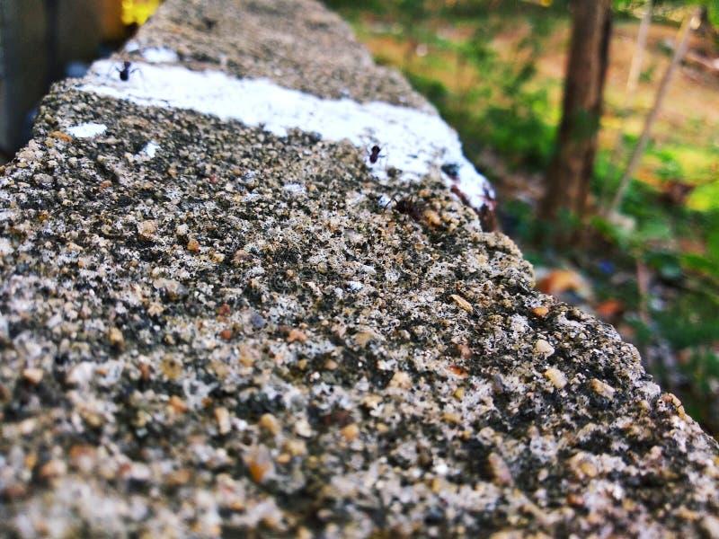 Närbildsikt av myror arkivfoto