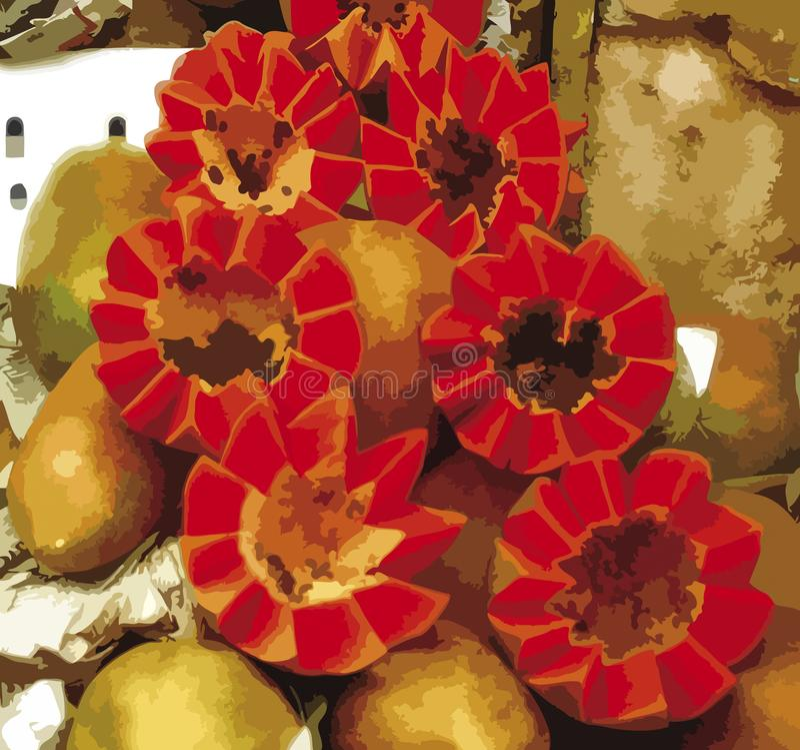 Närbildsikt av tropisk röd frukt, papaya, illustrativ design royaltyfri bild