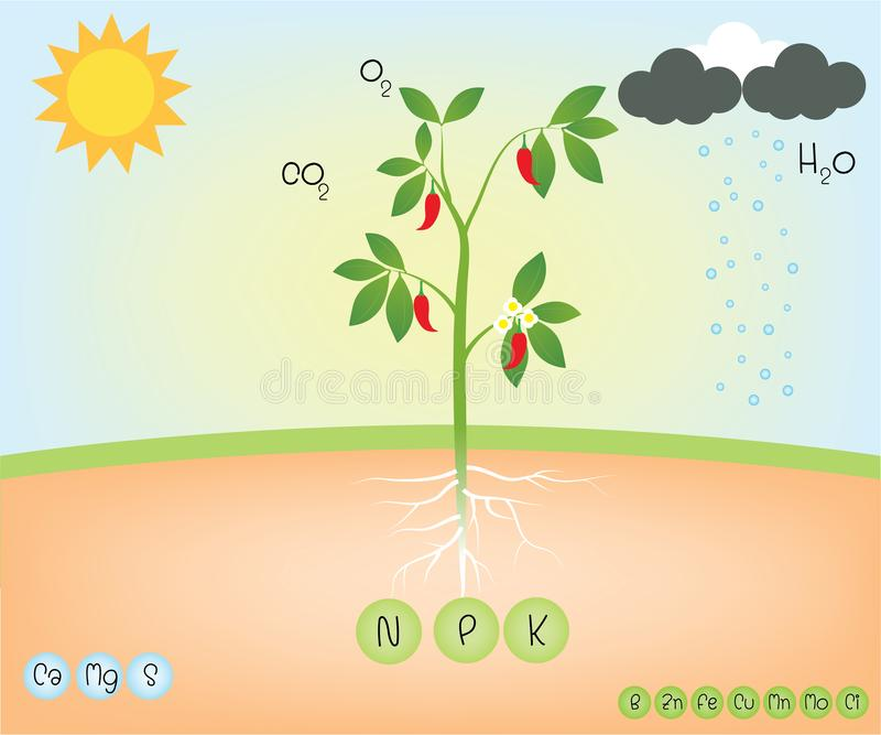 Näringsämne av en växt vektor illustrationer