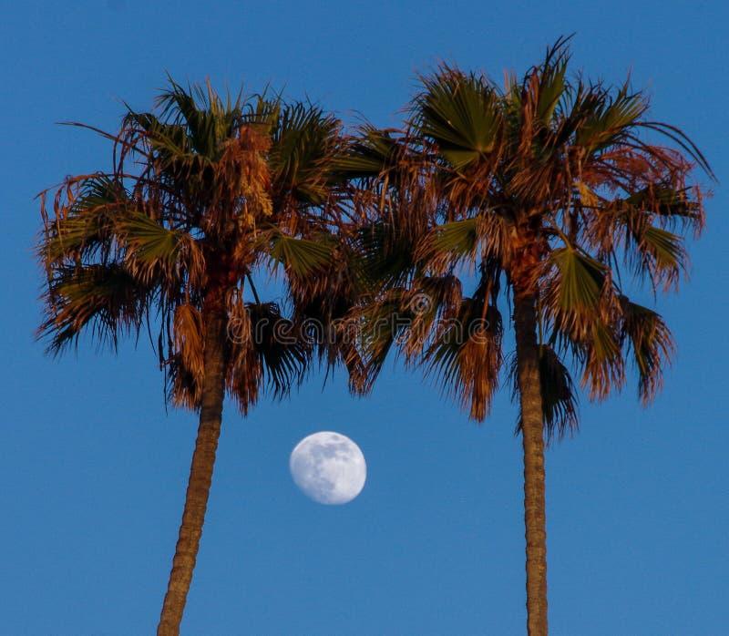 Nästan en fullmåne som inramas av två palmträd arkivfoton