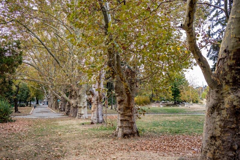 Nästan tom trädgård i i stadens centrum Sofia, Bulgarien arkivfoton