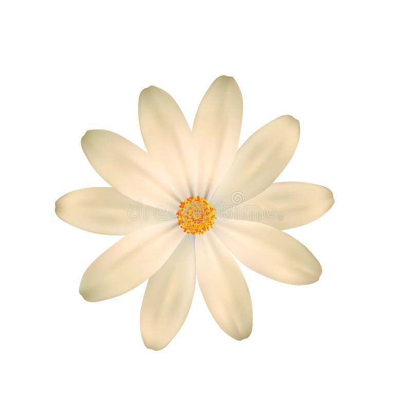 Nästan vitt, ljus - gul blomma En isolerad blomma royaltyfri illustrationer