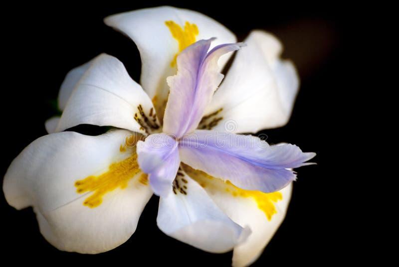 Nätt blomma royaltyfri foto