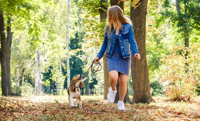 Nätt blond flicka som kör med beaglehunden arkivfoton