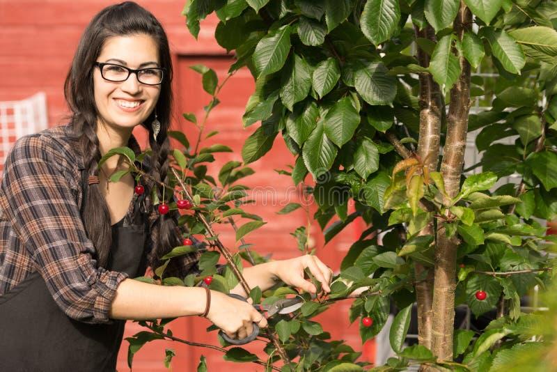 Nätt kvinna som ler katrinplommoner Cherry Tree Backyard Fruit arkivbilder