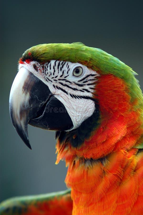 Download Nätt pojke arkivfoto. Bild av orange, oväsen, fluga, husdjur - 25586