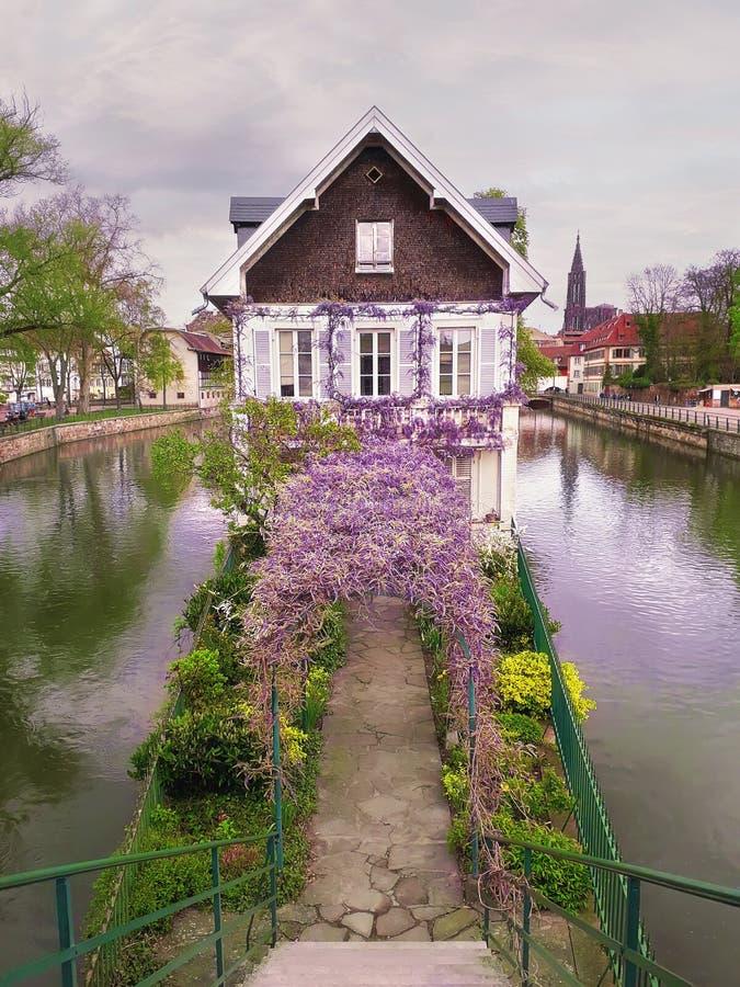 N?tt purpurf?rgad blomma wisteria som t?cker en v?lvd axel som leder till ett gammalt hus p? en kanal? i Petite France, Strasbour royaltyfri bild